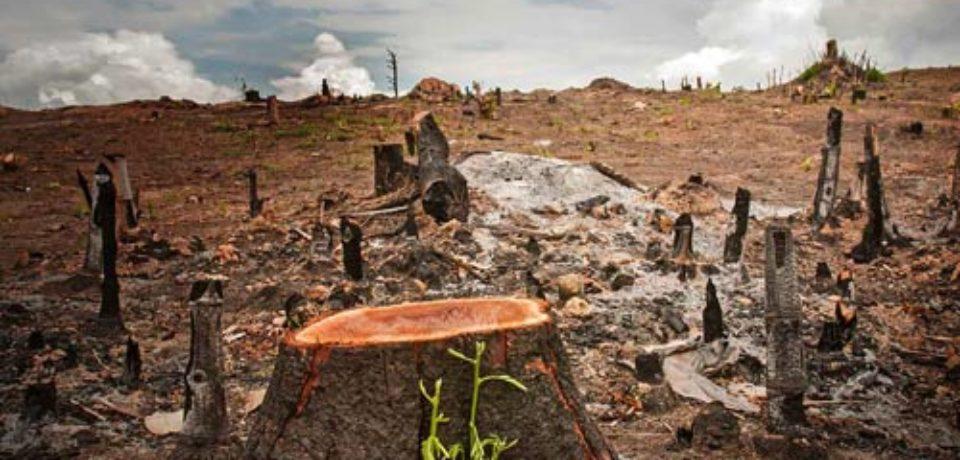 Salviamo il suolo: firmate la petizione
