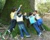 A tu per tu con gli alberi secolari di Villa Salina